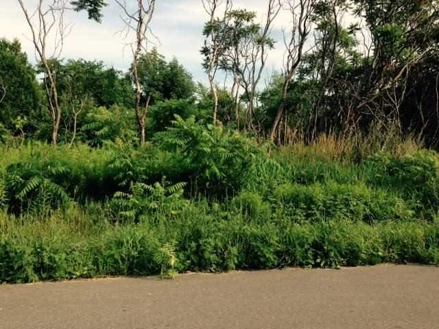 Vacant Land at 3421 Town Line Rd, Severn, Ontario. Image 5