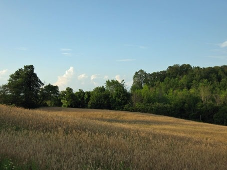 Vacant Land at 0 Mount Wolfe Rd, Caledon, Ontario. Image 1