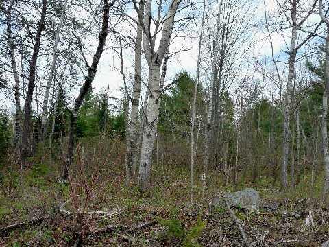 Vacant Land at 0 Mcdonald Rd, West Nipissing, Ontario. Image 2