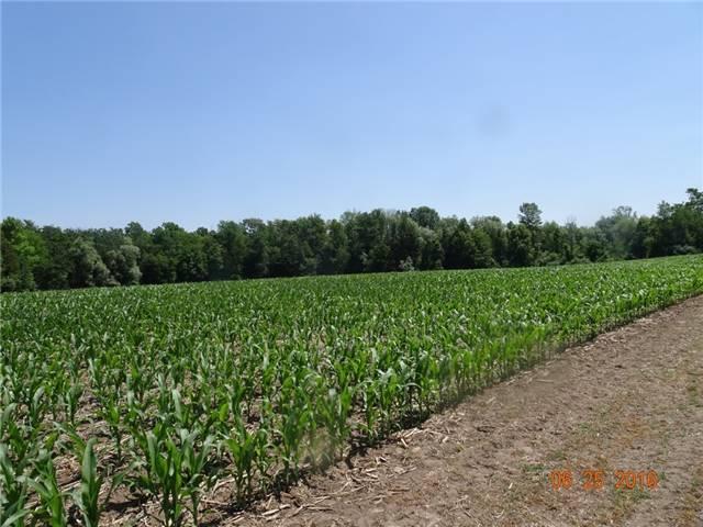 Farm at 1021 Concession 6th Rd, Hamilton, Ontario. Image 3