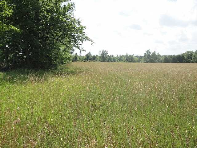 Vacant Land at Part 2 Jones Rd, Centre Hastings, Ontario. Image 1