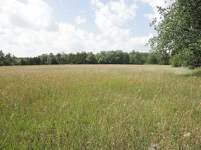 Vacant Land at Part 2 Jones Rd, Centre Hastings, Ontario. Image 3