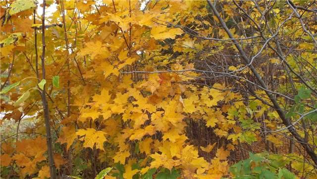 Vacant Land at 31 Moggy Pkwy S, Central Manitoulin, Ontario. Image 8