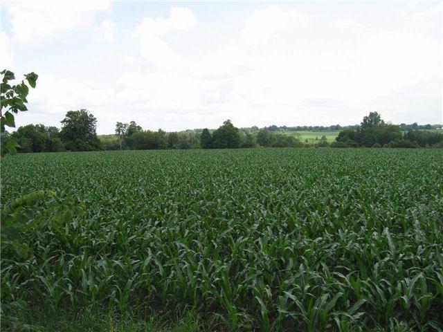 Vacant Land at 0 Farmstead Rd, Kawartha Lakes, Ontario. Image 4