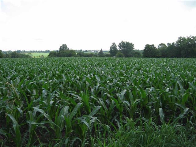 Vacant Land at 0 Farmstead Rd, Kawartha Lakes, Ontario. Image 5