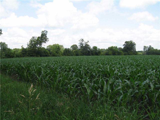 Vacant Land at 0 Farmstead Rd, Kawartha Lakes, Ontario. Image 6
