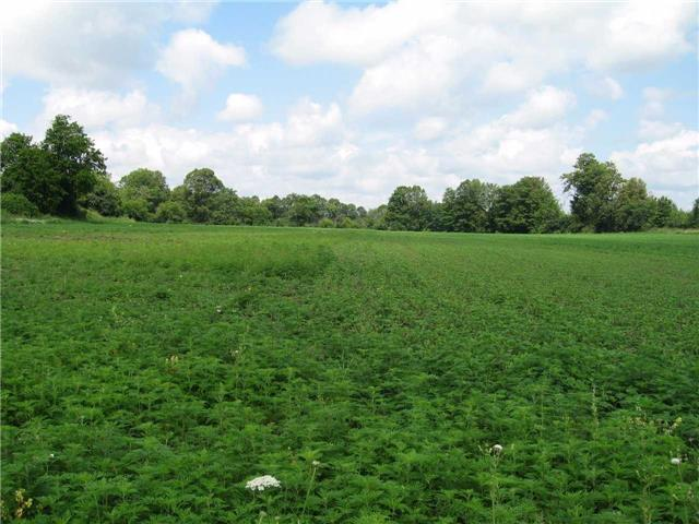 Vacant Land at 0 Farmstead Rd, Kawartha Lakes, Ontario. Image 7