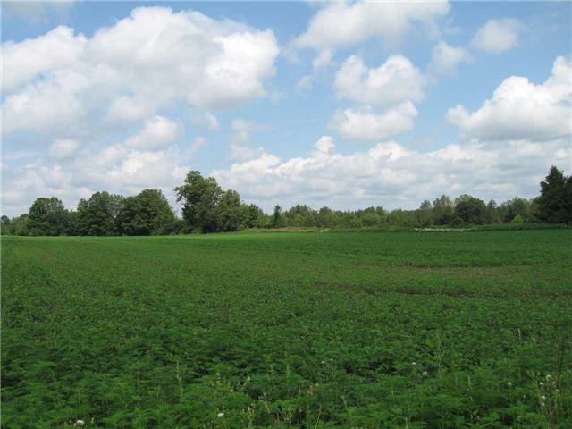 Vacant Land at 0 Farmstead Rd, Kawartha Lakes, Ontario. Image 8