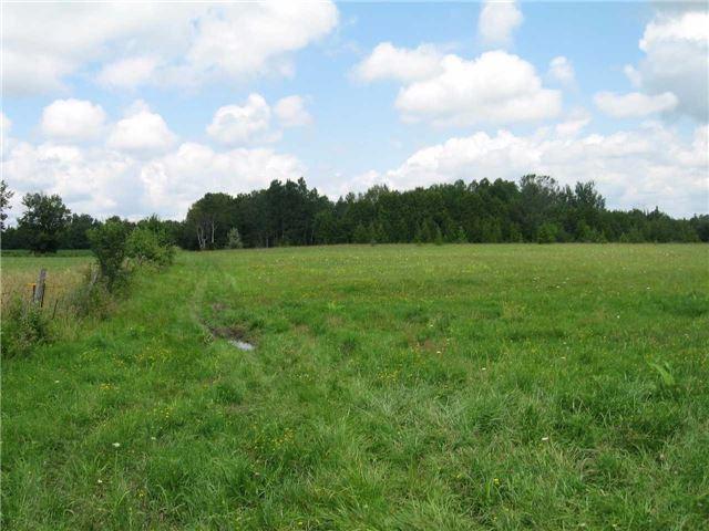 Vacant Land at 0 Farmstead Rd, Kawartha Lakes, Ontario. Image 10