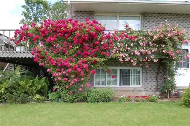 Detached at 9788 County Rd 2 Rd, Hamilton Township, Ontario. Image 12