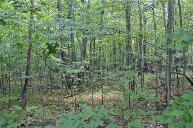 Vacant Land at 0 Blairton Rd, Havelock-Belmont-Methuen, Ontario. Image 3