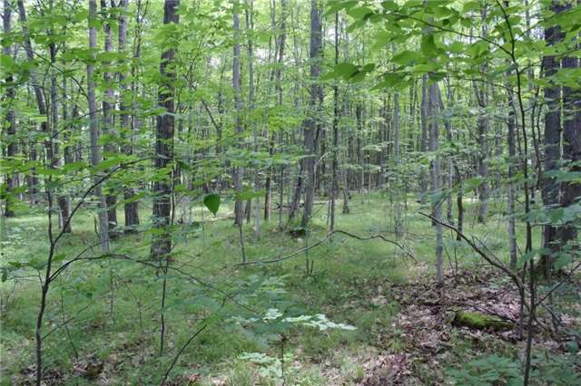 Vacant Land at 0 Blairton Rd, Havelock-Belmont-Methuen, Ontario. Image 4