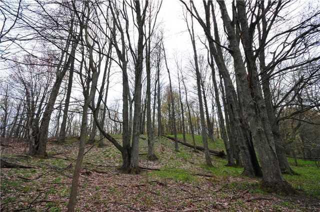 Vacant Land at Lot 31 7th Line E, Mulmur, Ontario. Image 3
