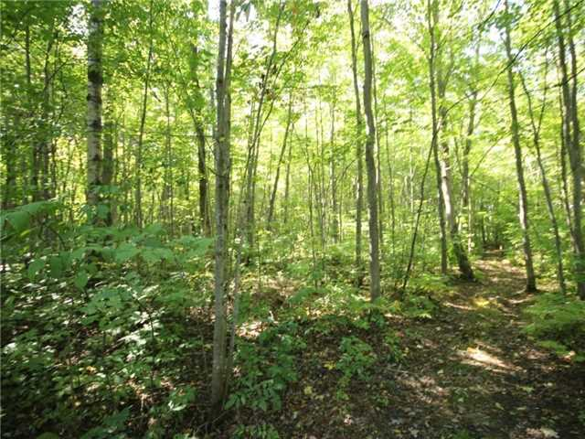 Vacant Land at 93 Limoges Rd, Nation, Ontario. Image 17