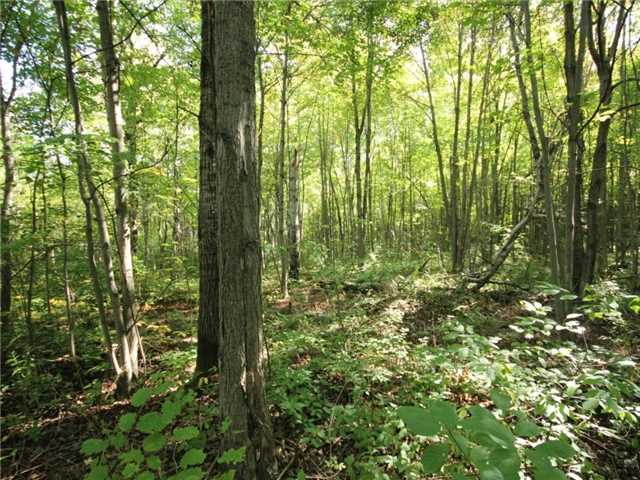Vacant Land at 93 Limoges Rd, Nation, Ontario. Image 5