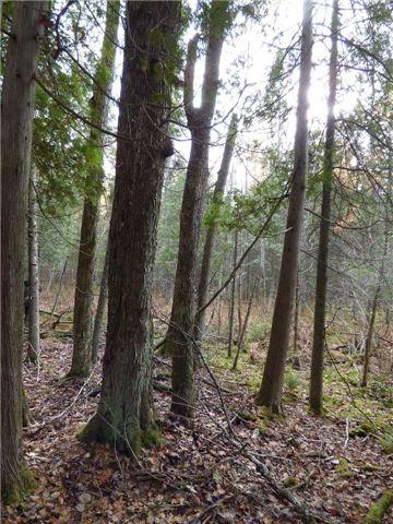 Vacant Land at 00 Kennaway Rd, Dysart et al, Ontario. Image 9