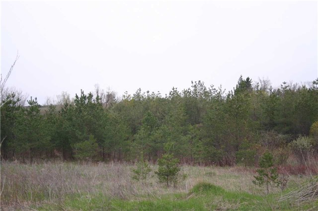 Vacant Land at Lot 29 Con 2, Amaranth, Ontario. Image 4