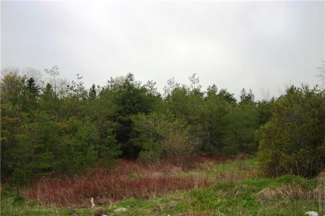 Vacant Land at Lot 29 Con 2, Amaranth, Ontario. Image 6