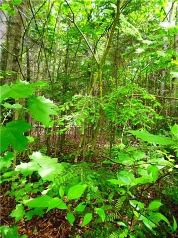 Vacant Land at 0 Clement Lake  Rd, Highlands East, Ontario. Image 4