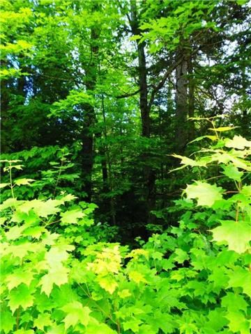 Vacant Land at 0 Clement Lake  Rd, Highlands East, Ontario. Image 5