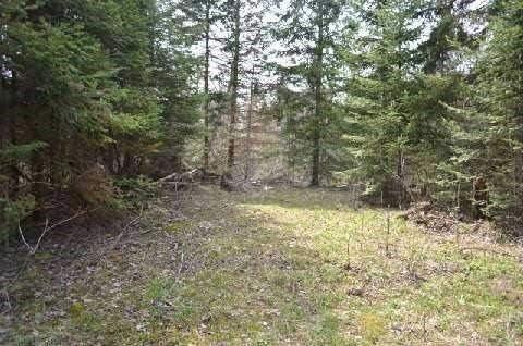 Vacant Land at 46 Kozy Kove Rd, Kawartha Lakes, Ontario. Image 1
