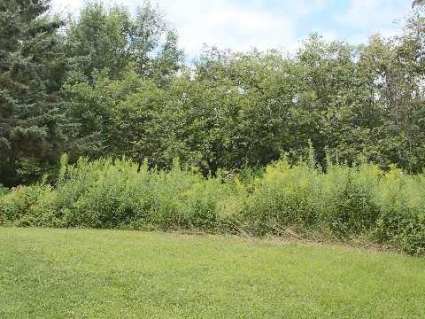 Vacant Land at Lot 11 Shuttleworth Rd, Kawartha Lakes, Ontario. Image 4