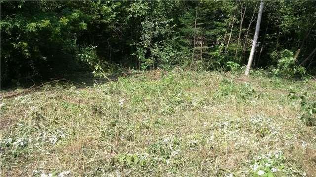 Vacant Land at Lot 11 Shuttleworth Rd, Kawartha Lakes, Ontario. Image 5