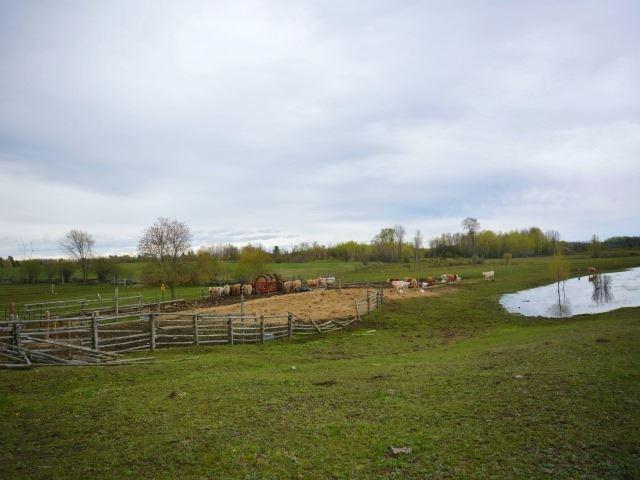 Vacant Land at 0 Portage Rd, Kawartha Lakes, Ontario. Image 6