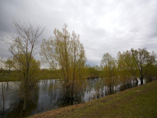Vacant Land at 0 Portage Rd, Kawartha Lakes, Ontario. Image 9