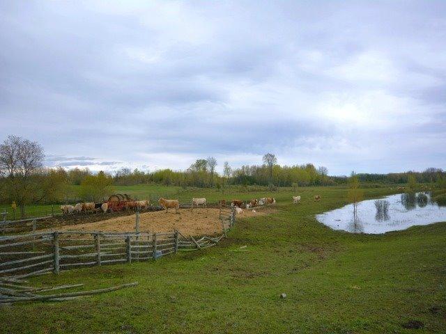 Vacant Land at 0 Portage Rd, Kawartha Lakes, Ontario. Image 2