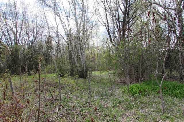 Vacant Land at 0 Rabys Shore Dr, Kawartha Lakes, Ontario. Image 3