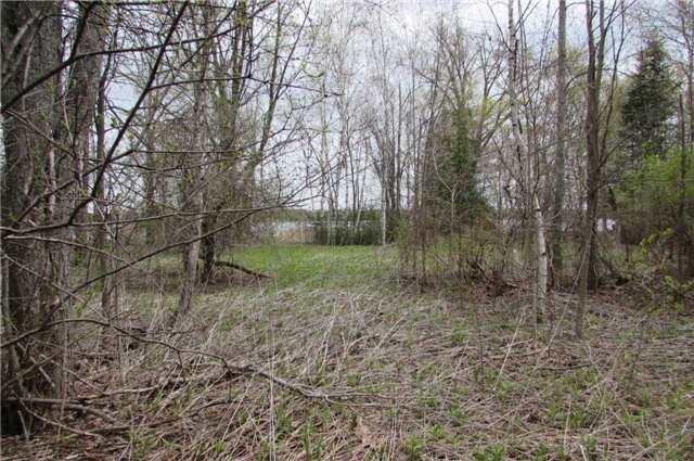 Vacant Land at 0 Rabys Shore Dr, Kawartha Lakes, Ontario. Image 5