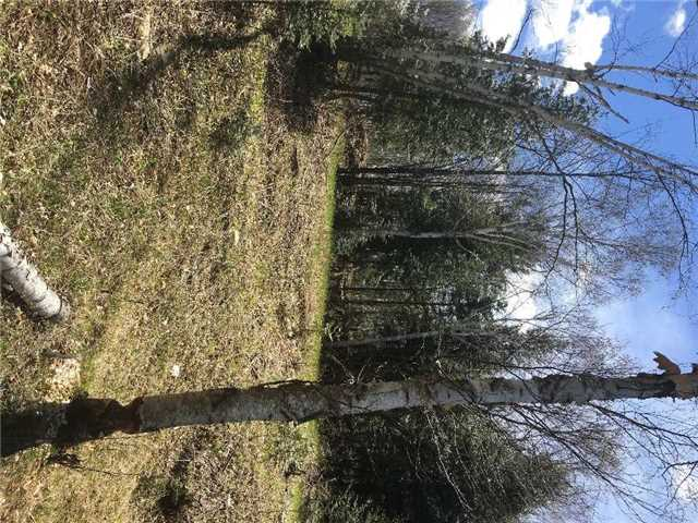Detached at Lot 4 Limerick Lake Sdrd, Limerick, Ontario. Image 10