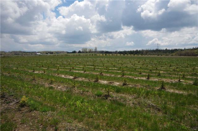 Vacant Land at 9999 Hwy 10 Acre N, Mono, Ontario. Image 5