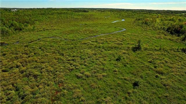 Vacant Land at 0 Balsam Grove Rd, Kawartha Lakes, Ontario. Image 3