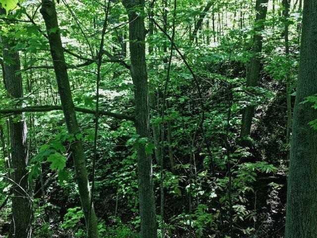 Vacant Land at 3180 Tallman Dr, Lincoln, Ontario. Image 8