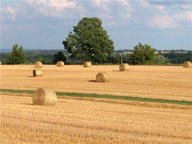 Vacant Land at 936284 Airport Road Rd, Mulmur, Ontario. Image 14