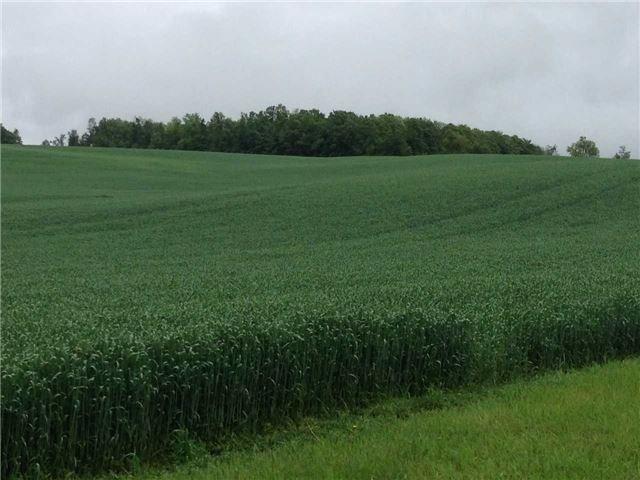Vacant Land at 936284 Airport Road Rd, Mulmur, Ontario. Image 2