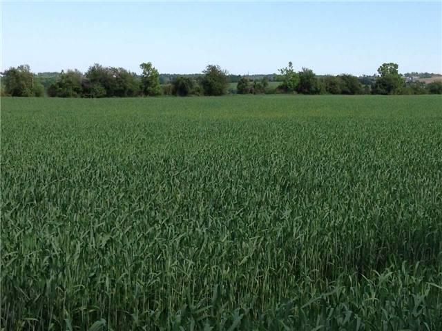 Vacant Land at 936234 Airport Road Rd, Mulmur, Ontario. Image 19