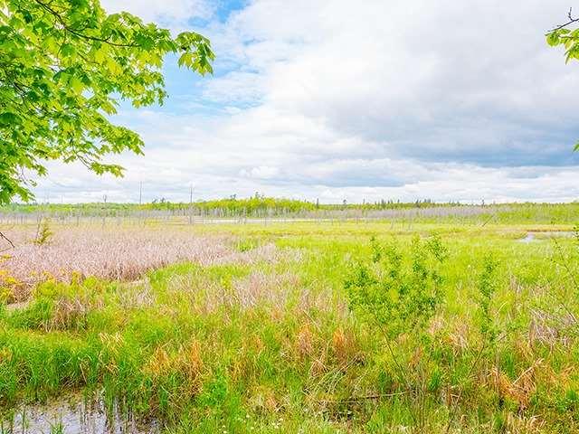 Vacant Land at N/A Flynn Rd, Tweed, Ontario. Image 7