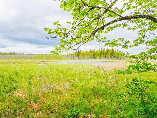 Vacant Land at N/A Flynn Rd, Tweed, Ontario. Image 8
