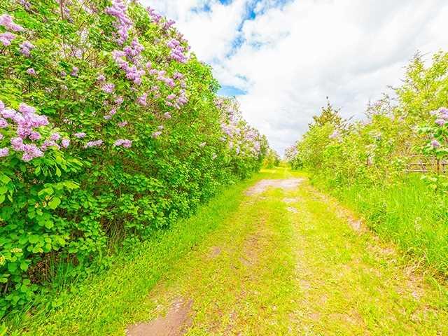 Vacant Land at N/A Flynn Rd, Tweed, Ontario. Image 14