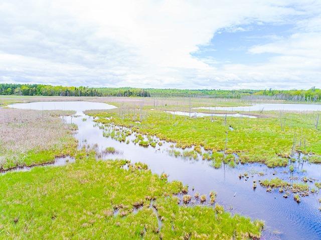 Vacant Land at N/A Flynn Rd, Tweed, Ontario. Image 6