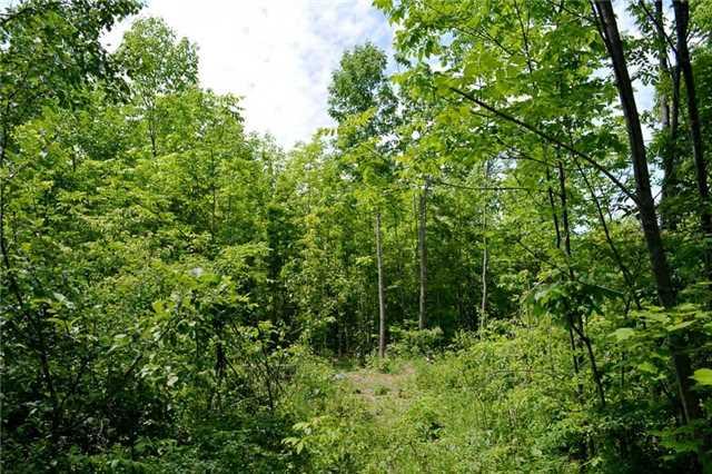 Vacant Land at 720624 20 Sdrd, Chatsworth, Ontario. Image 7