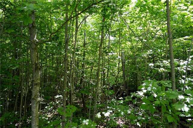 Vacant Land at 720624 20 Sdrd, Chatsworth, Ontario. Image 3