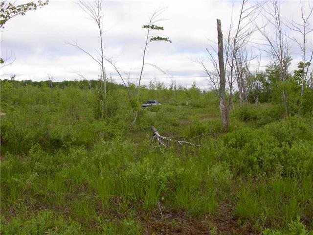 Vacant Land at 130 Baker Blvd, Kawartha Lakes, Ontario. Image 3