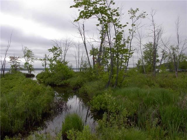 Vacant Land at 130 Baker Blvd, Kawartha Lakes, Ontario. Image 4