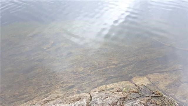 Vacant Land at L10 Swaugers Creek Lane, North Frontenac, Ontario. Image 4