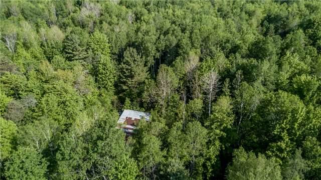 Vacant Land at 341 Monck Rd, Kawartha Lakes, Ontario. Image 16