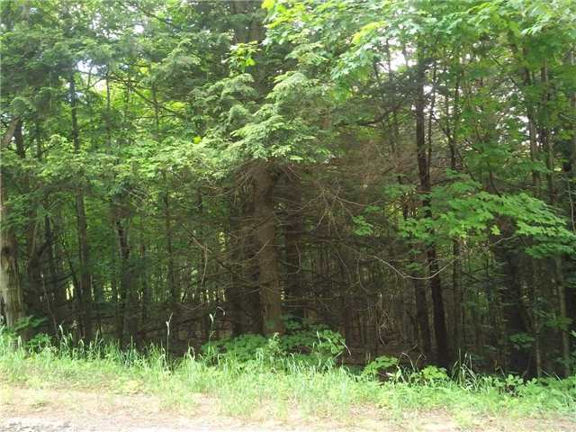Vacant Land at 00 Wingle Rd, Brudenell, Lyndoch and Ragl, Ontario. Image 3